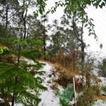 snow-fall-kasauli-11