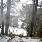 snow-fall-kasauli-28