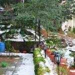 snow-fall-kasauli-8